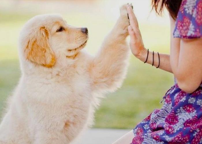 5 Jenis Anjing Yang Bisa Kamu Pelihara